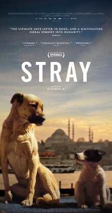 Stray Türkçe Dublaj indir | DUAL | 2020